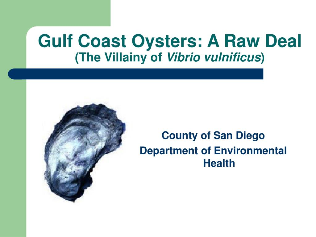 gulf coast oysters a raw deal the villainy of vibrio vulnificus l.
