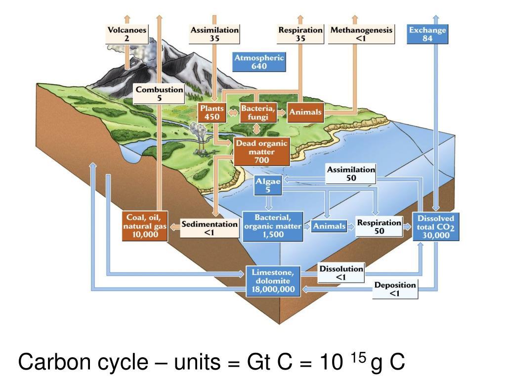 Carbon cycle – units = Gt C = 10