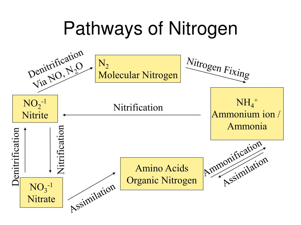 Pathways of Nitrogen