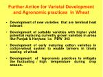 further action for varietal development and agronomic practices in wheat
