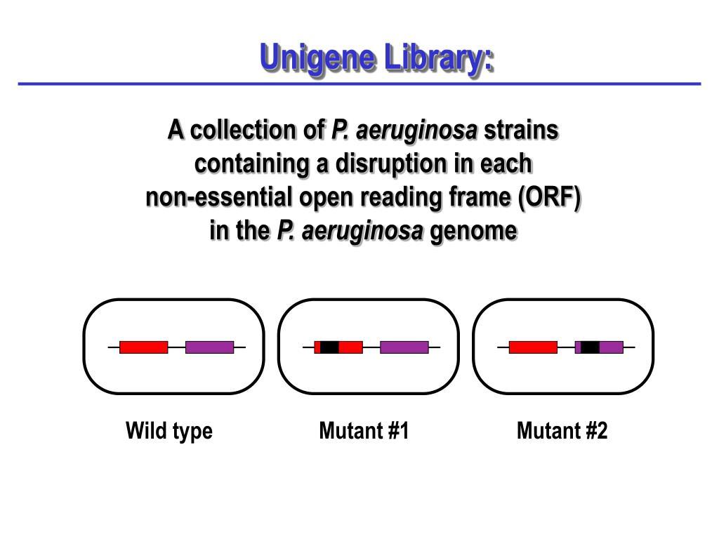 Unigene Library: