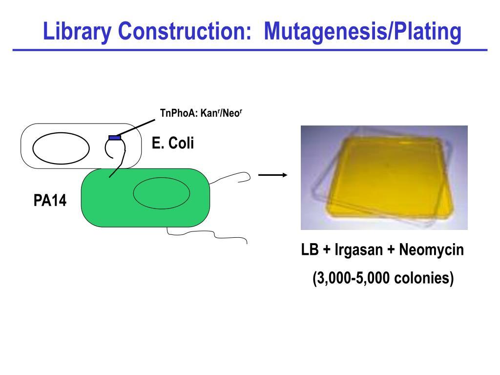 Library Construction:  Mutagenesis/Plating