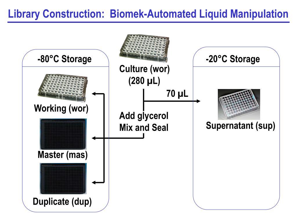 Library Construction:  Biomek-Automated Liquid Manipulation