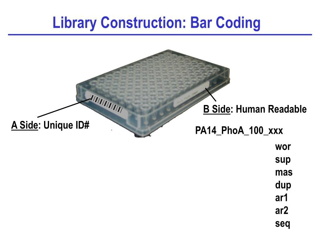 Library Construction: Bar Coding