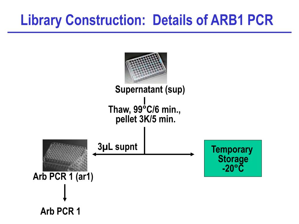 Library Construction:  Details of ARB1 PCR