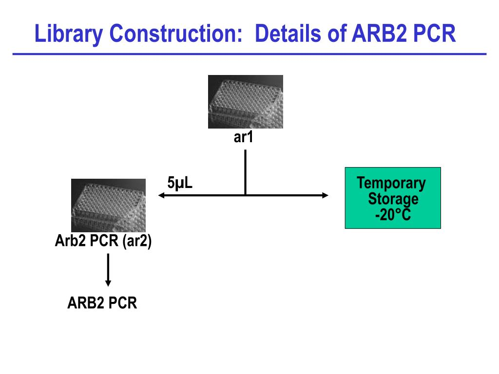 Library Construction:  Details of ARB2 PCR
