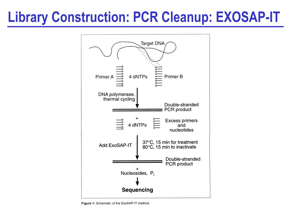 Library Construction: PCR Cleanup: EXOSAP-IT