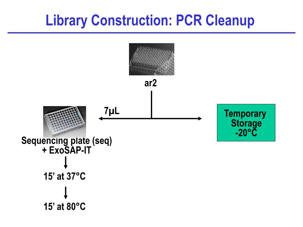 Library Construction: PCR Cleanup