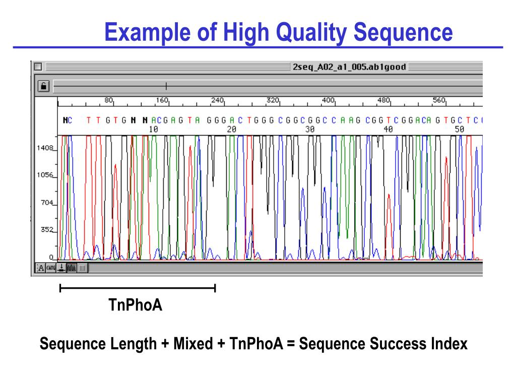 Example of High Quality Sequence