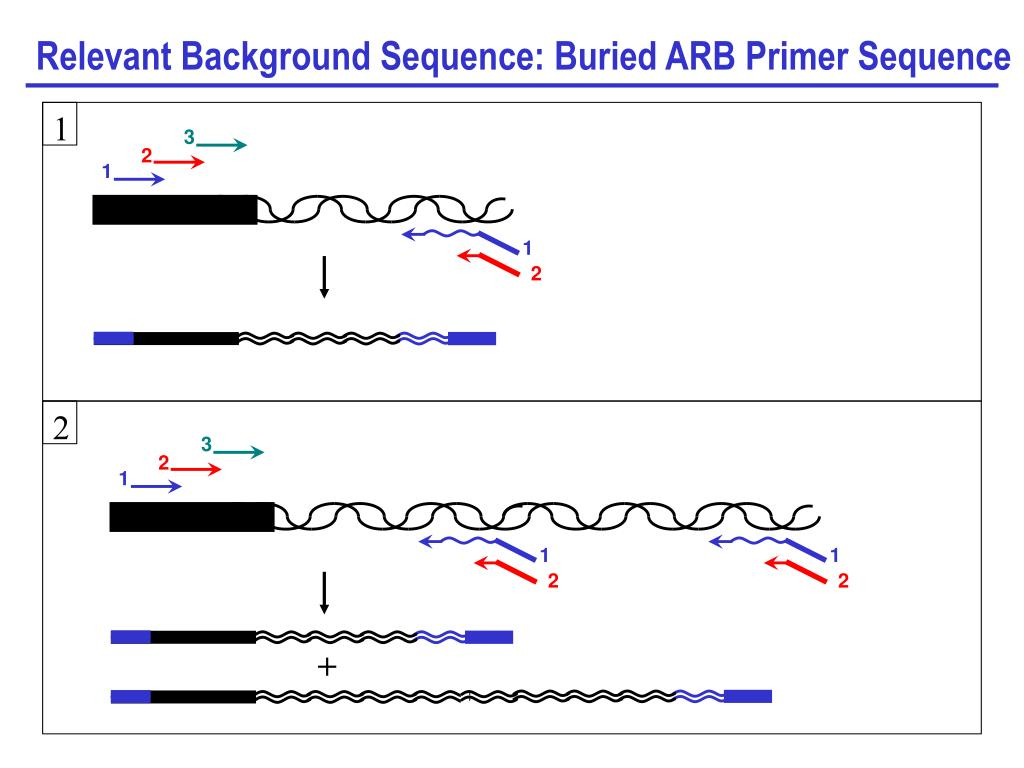 Relevant Background Sequence: Buried ARB Primer Sequence