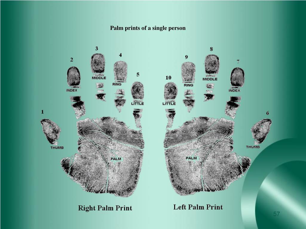 Palm prints of a single person