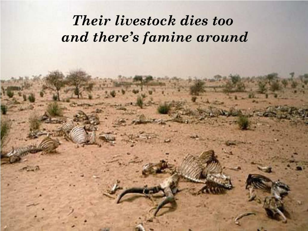 Their livestock dies too