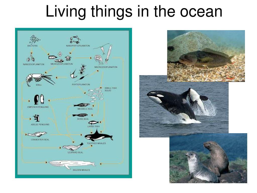 Living things in the ocean