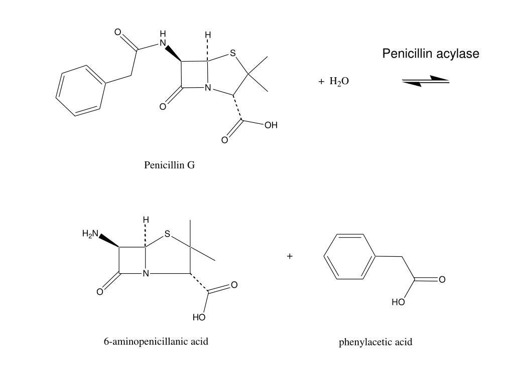 Penicillin acylase