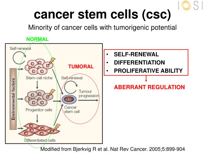 cancer stem cells essay When a stem cell divides, each daughter cell has the potential to either remain a stem cell or become another type of cell with a more specialized function, such as a muscle cell, a red blood cell, or a brain cell (stem, 2006.