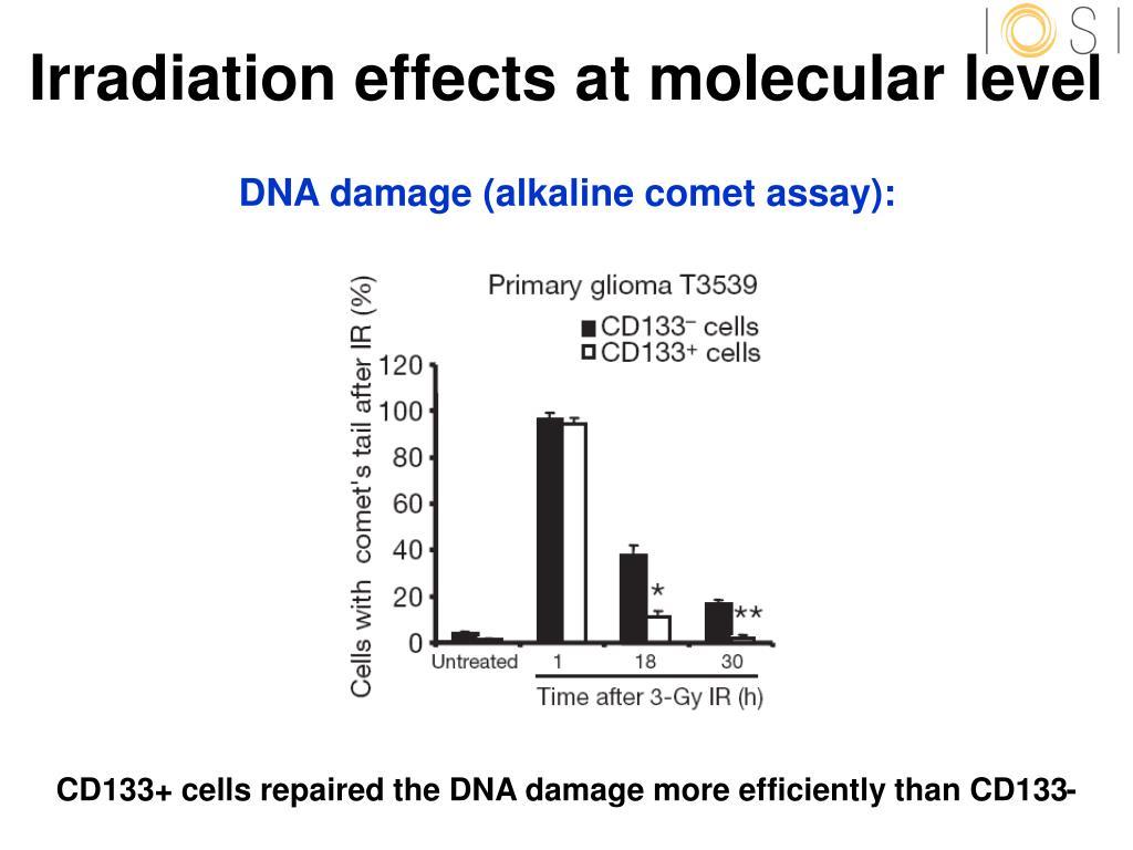 Irradiation effects at molecular level