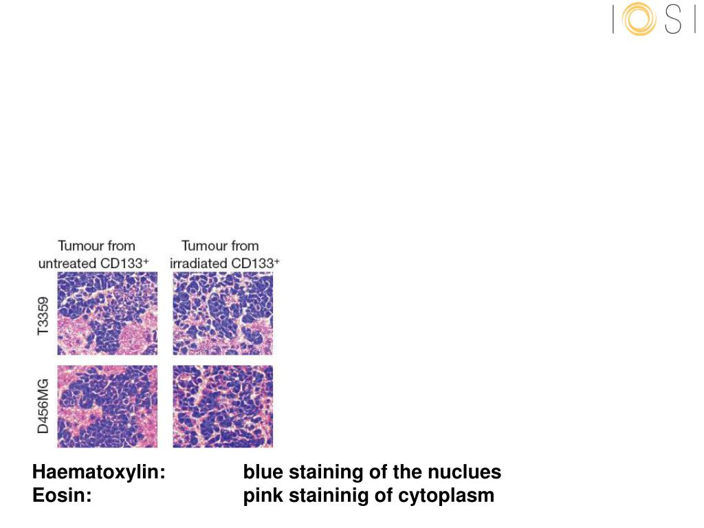 Haematoxylin:blue staining of the nuclues