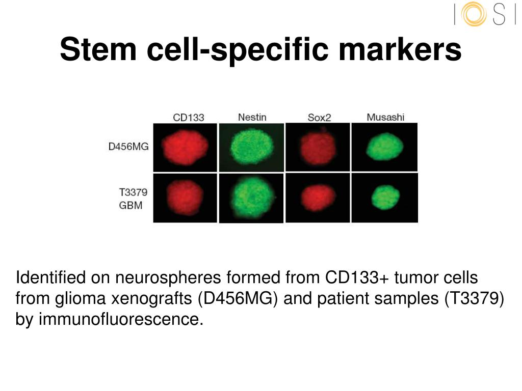 Stem cell-specific markers