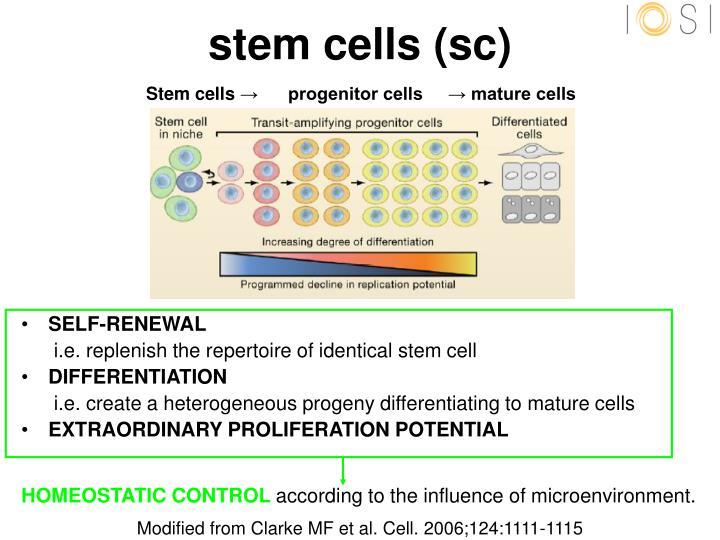 Stem cells sc