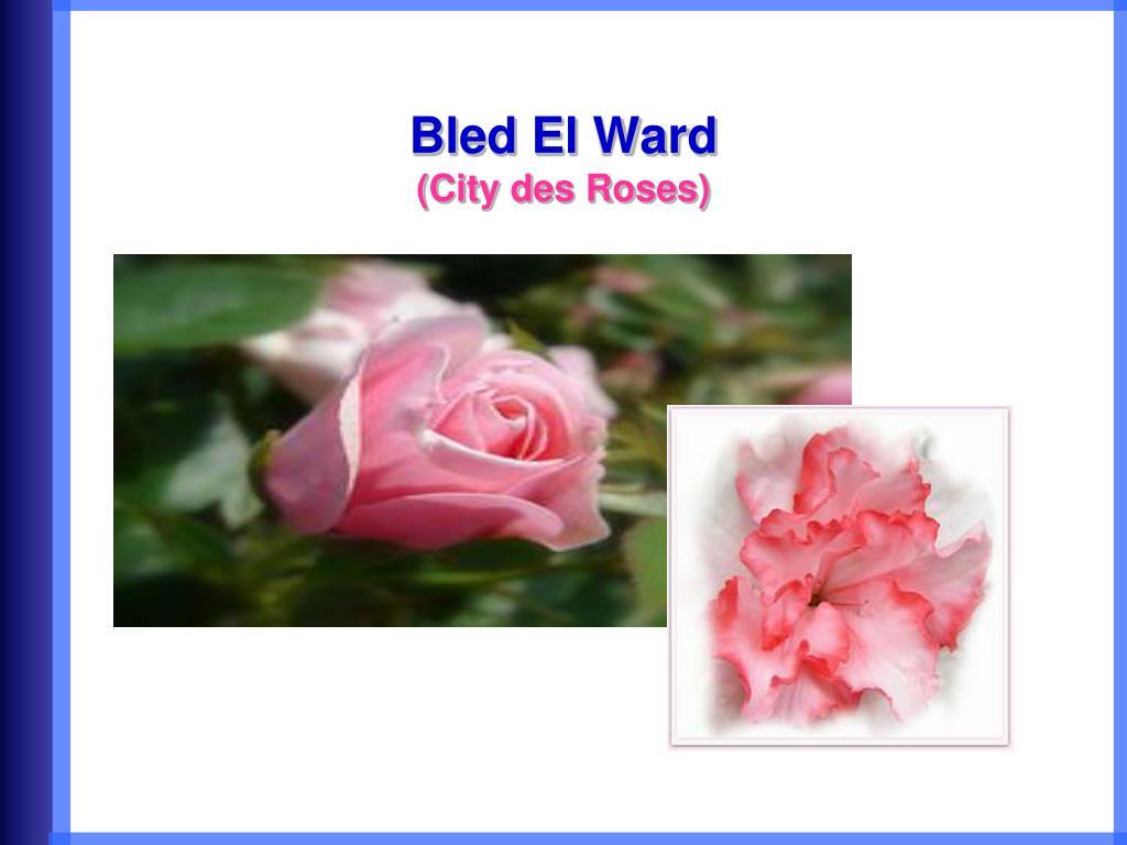 Bled El Ward