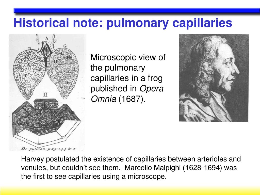 Historical note: pulmonary capillaries
