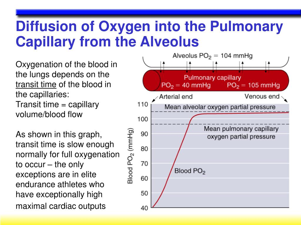 Diffusion of Oxygen into the Pulmonary Capillary from the Alveolus
