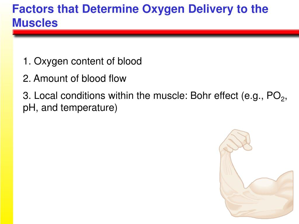 Factors that Determine Oxygen Delivery to the Muscles