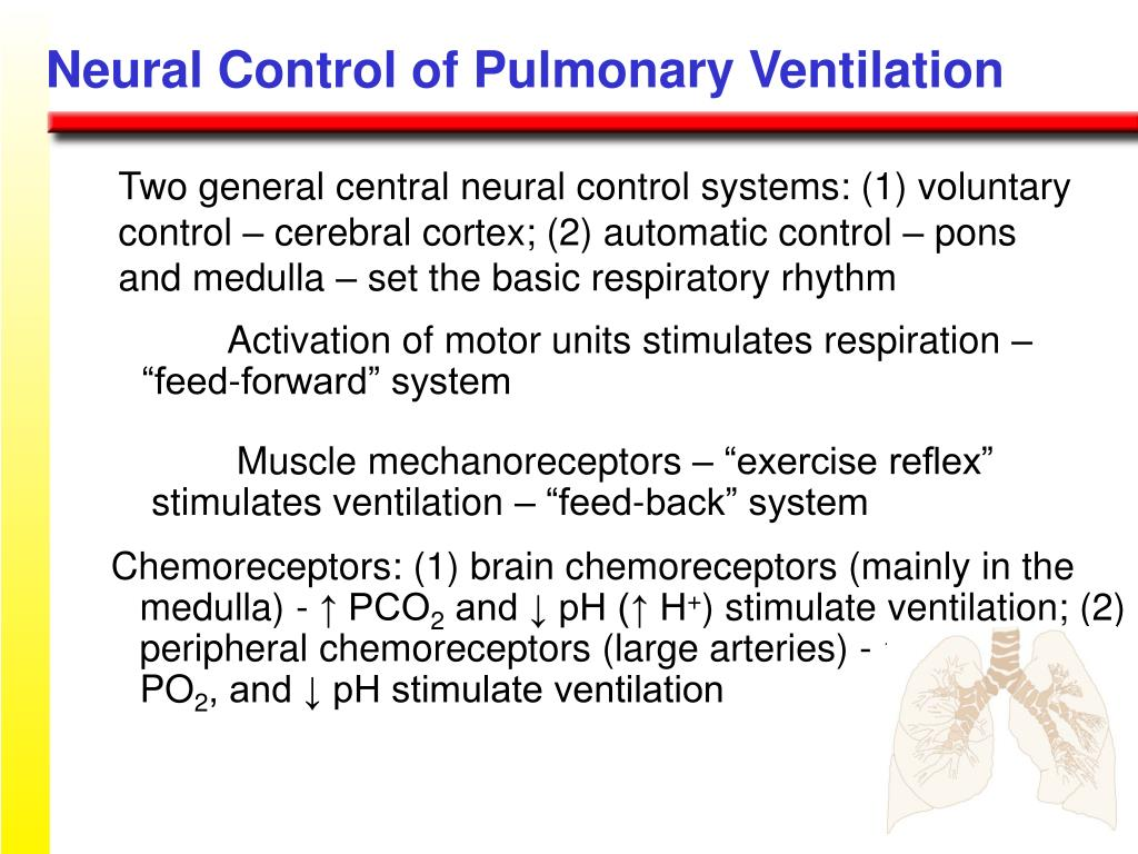 Neural Control of Pulmonary Ventilation