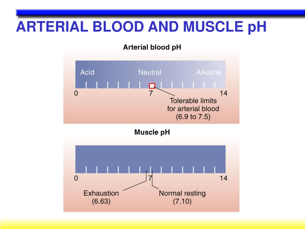 ARTERIAL BLOOD AND MUSCLE pH