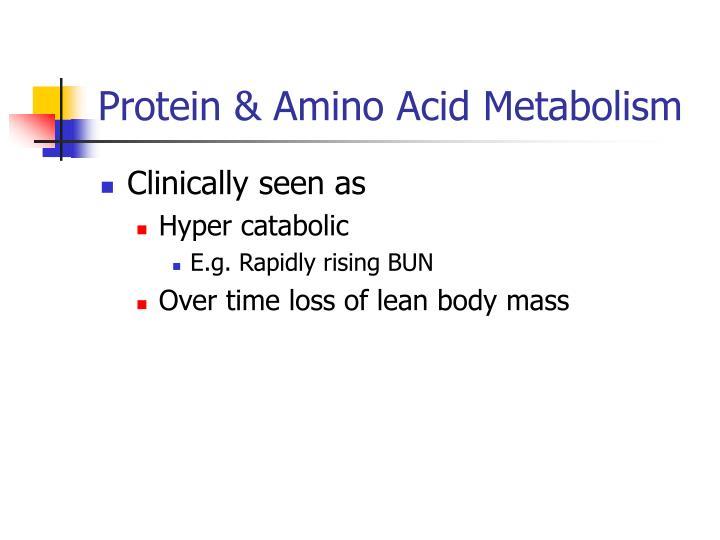 Protein amino acid metabolism