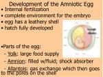 development of the amniotic egg