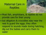 maternal care in reptiles
