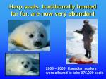 harp seals traditionally hunted for fur are now very abundant