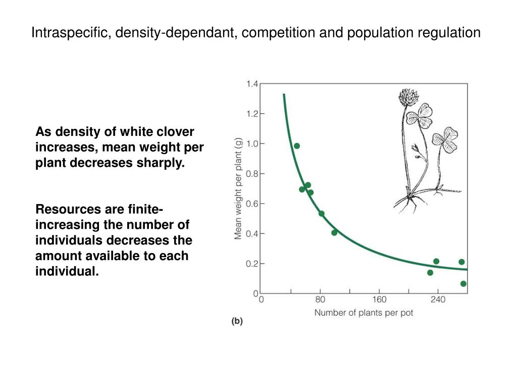 Intraspecific, density-dependant, competition and population regulation