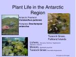plant life in the antarctic region