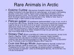 rare animals in arctic