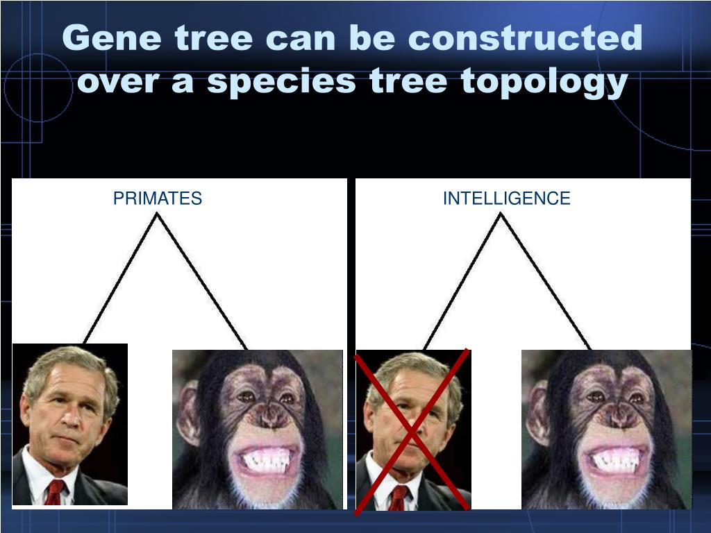 Gene tree can be constructed over a species tree topology