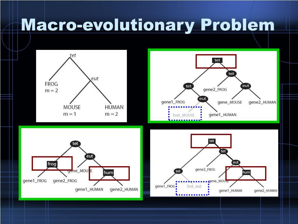 Macro-evolutionary Problem