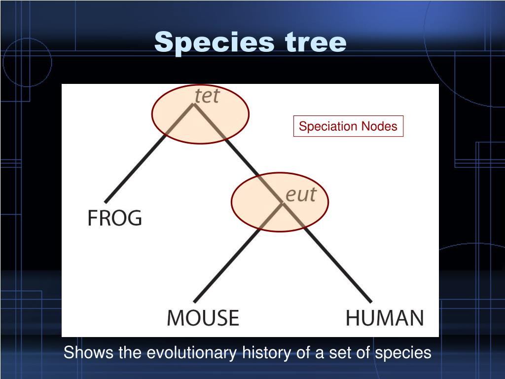 Species tree