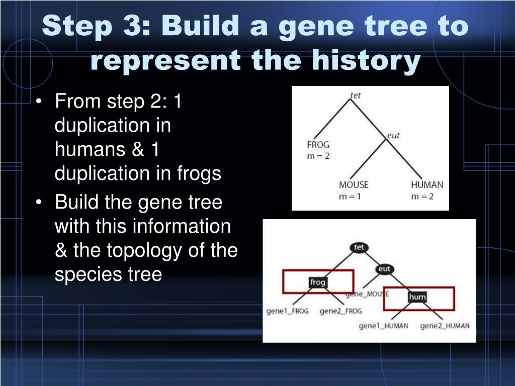 Step 3: Build a gene tree to represent the history