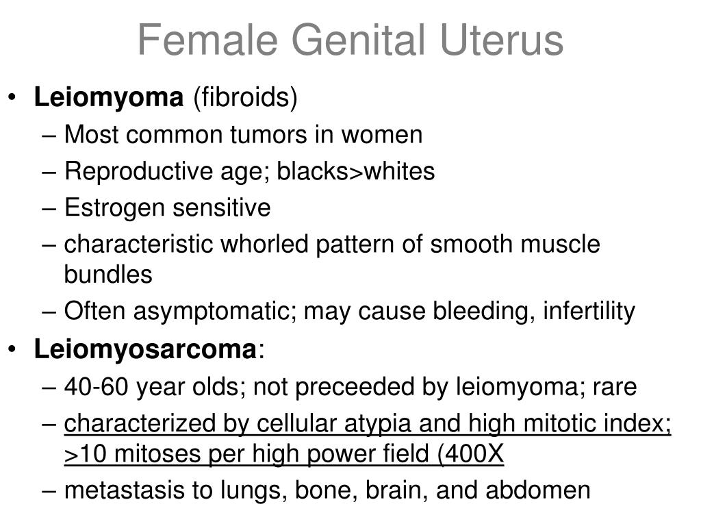 Female Genital Uterus