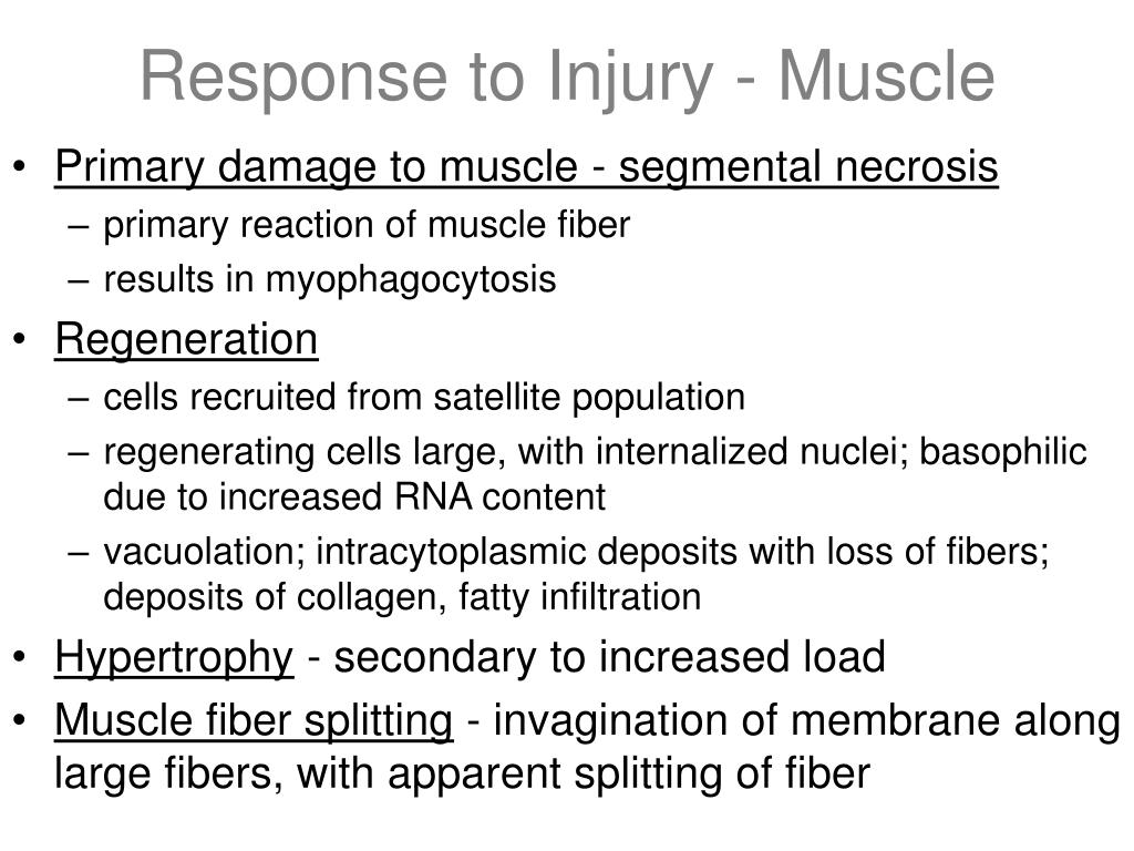 Response to Injury - Muscle