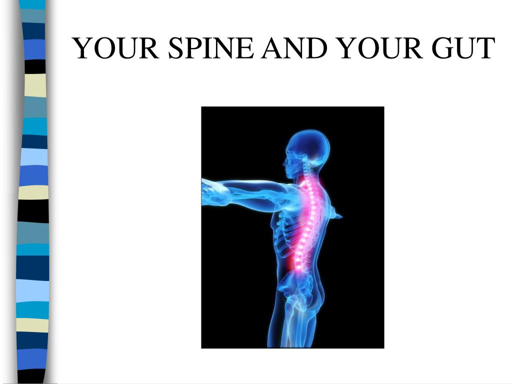 YOUR SPINE AND YOUR GUT