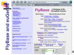 flybase and eugenes