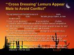 cross dressing lemurs appear male to avoid conflict