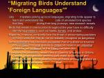 migrating birds understand foreign languages