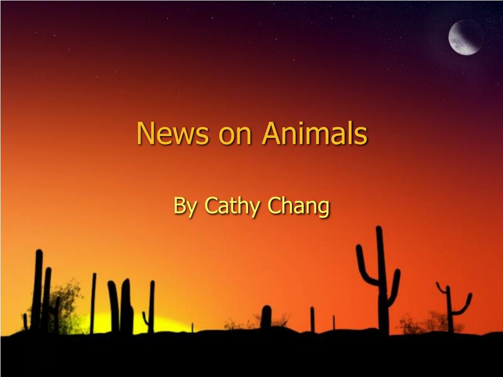 news on animals l.
