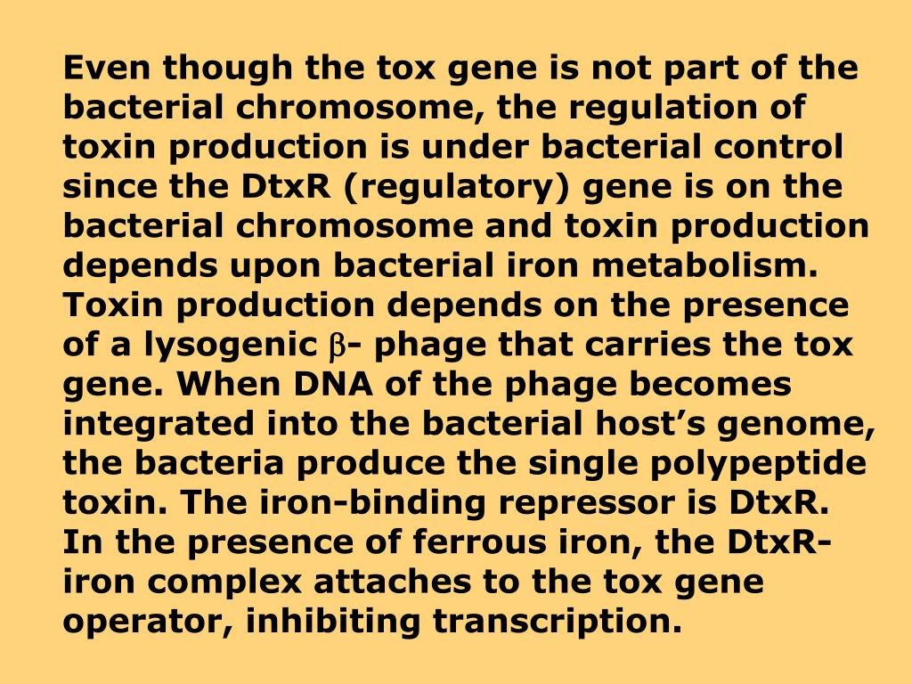 Even though the tox gene is not part of the bacterial chromosome, the regulation of toxin production is under bacterial control since the DtxR (regulatory) gene is on the bacterial chromosome and toxin production depends upon bacterial iron metabolism.