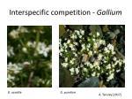 interspecific competition gallium