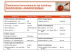 clasificaci n taxon mica de las hortalizas subdivision angiospermae